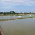 Ứng dụng chế phẩm sinh học trong nuôi trồng thủy sản – Phần 2