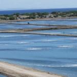 Ứng dụng chế phẩm sinh học trong nuôi trồng thủy sản – Phần 1