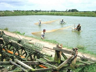 Men vi sinh men tiêu hóa trong nuôi trồng thủy sản