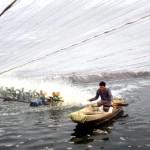 Tóm tắt lịch sử nuôi tôm ở Việt Nam – Phần 1